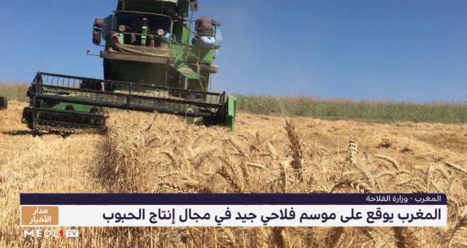 المغرب يوقع على موسم فلاحي جيد في مجال إنتاج الحبوب