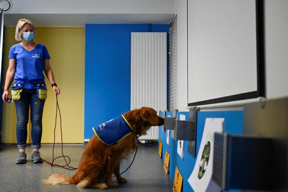 بوكا أول كلب يكشف الإصابة بكوفيد-19 في مأوى للمسنين في فرنسا
