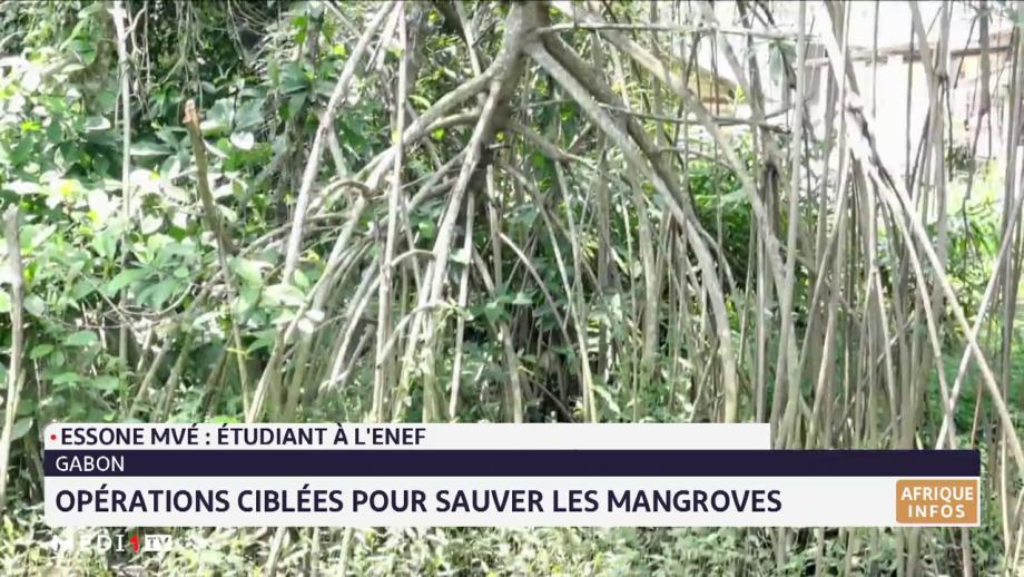 Gabon: opérations ciblées pour sauver les mangroves