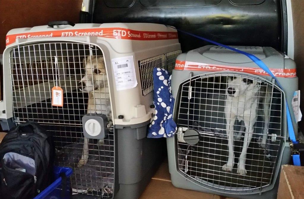 لندن مستعدة لإخراج 200 كلب وهرّ من أفغانستان في رحلة جوية