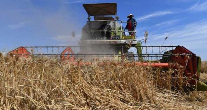 لمقاومة تغير المناخ..مزارعون تونسيون يعودون لاستخدام البذور الأصلية