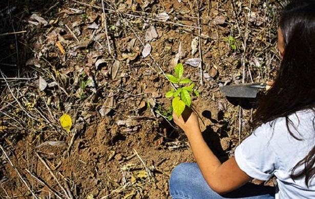 تركيا تخطط لزراعة 100 مليون شتلة لتعويض حرائق الغابات