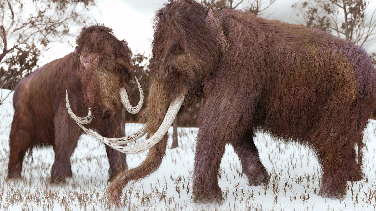 Une entreprise américaine se donne pour mission de recréer des mammouths laineux