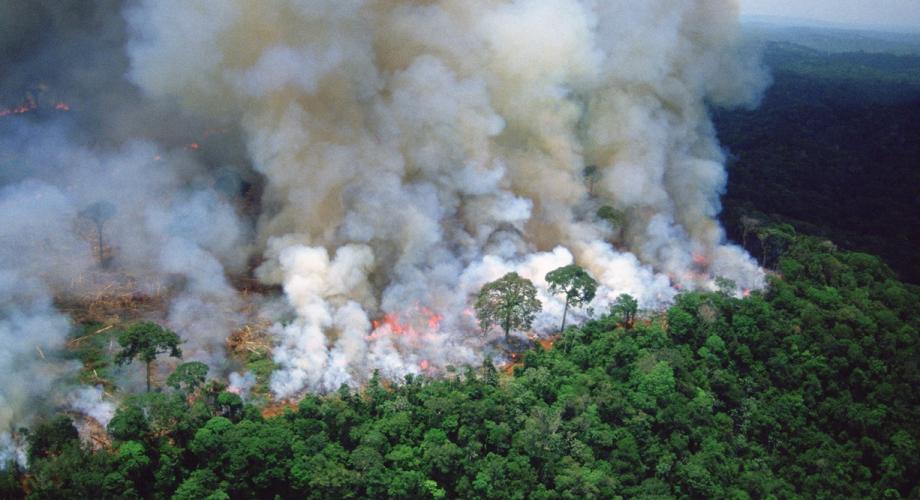 انخفاض مساحة الغابات المتضررة من الحرائق بـ47 في المائة