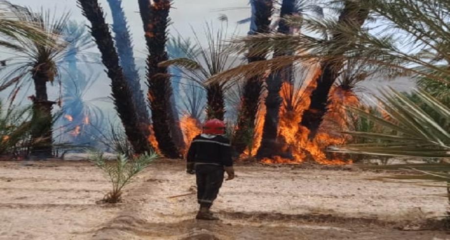 Chtouka-Ait Baha: les efforts se poursuivent pour maîtriser un incendie dans l'Oasis de Targa