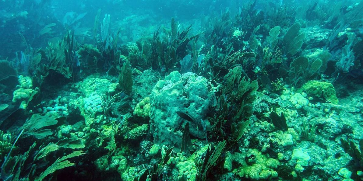 Climat: Disparition de 14% du corail dans le monde entre 2009 et 2018
