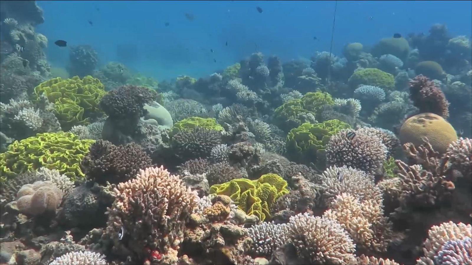 تقرير: فقدان 14 في المئة من الشعب المرجانية خلال عشر سنوات