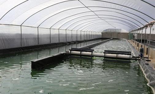 إطلاق طلب عروض لإنشاء مزارع تربية الطحالب لفائدة تعاونيات الصيد التقليدي بإقليم شفشاون