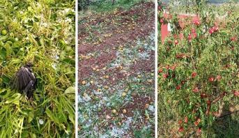 تضرر 9100 هكتار من المحاصيل الزراعية بجهة فاس مكناس بسبب عاصفة الصقيع