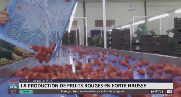 Agriculture: la production de fruits rouges en forte hausse