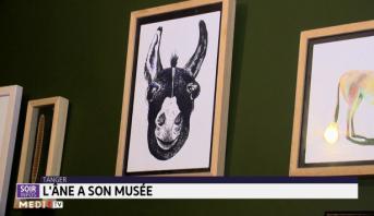 L'âne a son musée à Tanger
