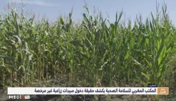 الـ ONSSA يكشف حقيقة دخول مبيدات زراعية غير مرخصة