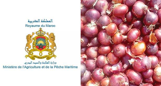 توضيحات وزارة الفلاحة حول وضعية أسعار البصل والطماطم خلال شهر رمضان